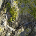 Lichen on the rocks